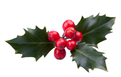 Image result for xmas berries