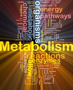 Whats YOUR Metabolism?